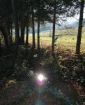 Povabilo v gozd